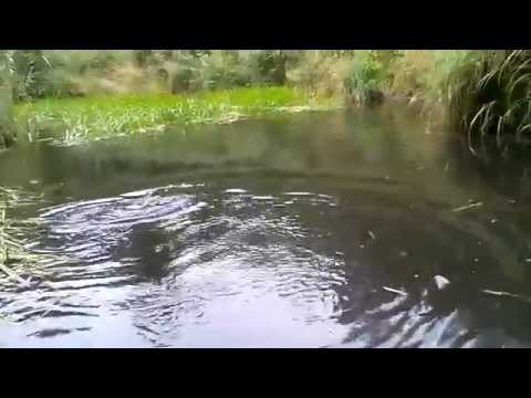 Brown Trout On A Spinning Leech In Estonia