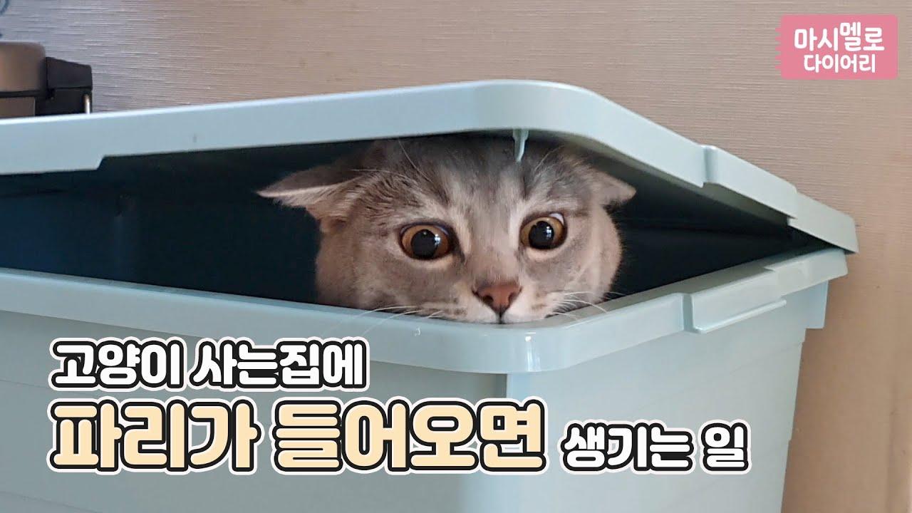 고양이 사는집에 파리가 들어오면 생기는 일