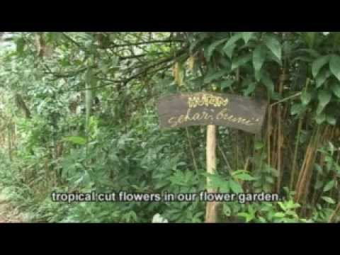 Flowers in the forest: an organic agroforestry and rice system in Bali