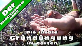 Die ideale Gruenduengung im Garten