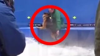 Repeat youtube video Hollywood Stunt Dog Forcefully Pushed Into Terrifying Water Conditions