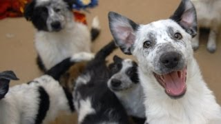 Dogtown At Best Friends Animal Sanctuary In Utah