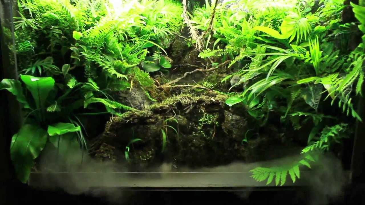Image result for river tank paludarium