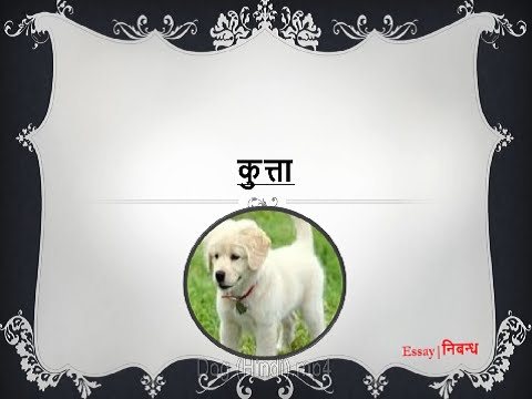 essay on pet animals dog