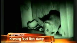 Learn roof rat prevention in Tempe