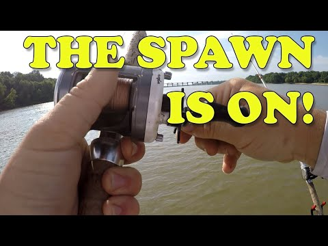 You CAN Catch Catfish During The June Spawn! - Fishing The Ohio River