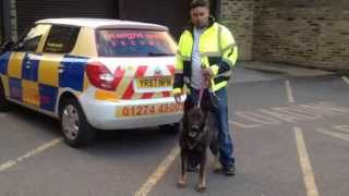 Security Dog Patrol Covering Bradford, Leeds, Wakefield,, Huddersfield, Halifax, West Yorkshire