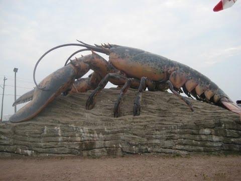 Гигантский омар! Документальные фильмы, фильмы о животных