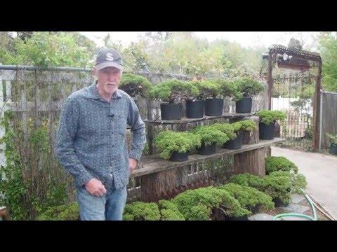 Plant City Bonsai - Spring 2016