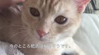 大好きなママにくっついて離れない甘えっ子猫 thumbnail