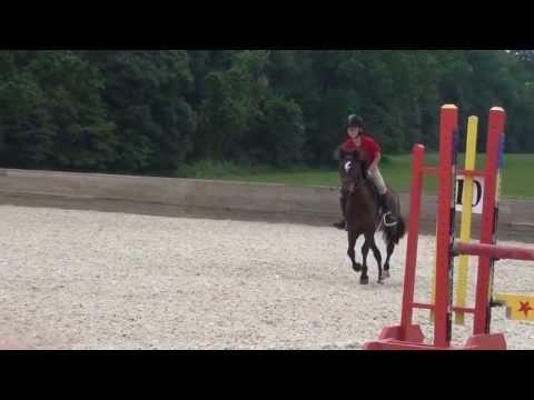 Dartmoor Pony has LIttle Springers on his Heels!