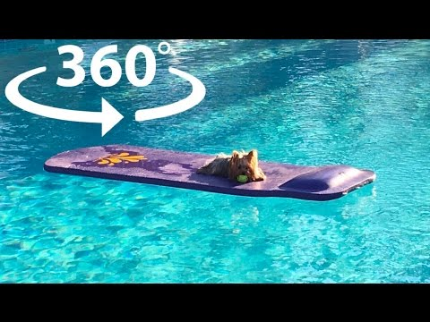 Puppy Loves Lounging by the Pool - Frank's VR Vlog - Chapter 6: Palm Springs Pool Day