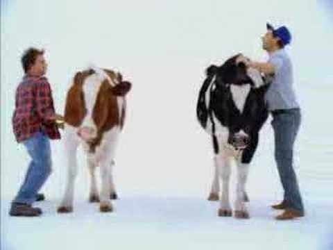 shake that cow thing youtube