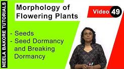 Morphology of Flowering Plants - Seeds - Seed Dormancy and Breaking Dormancy