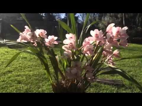 Como cultivar orquideas con exito en mar del plata - Plantas perennes exterior ...