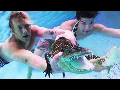 Alligators In My Pool with Alex Wassabi!