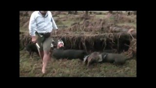Pig Hunting in the Northern Territory