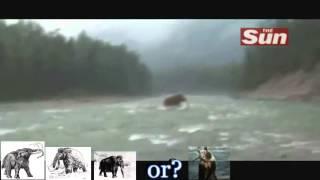 oso  EN SIBERIA 2012 lleva pescado en la boca