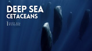 Cetaceans, the Giants of the Open Ocean
