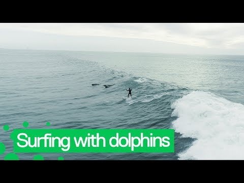 Bill Reed - Watch this surfer and his dolphin friends!