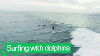 サイコーの体験だった!イルカとサーフィンを楽しんだ様子が、たまたま撮影されていた奇跡