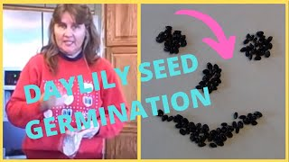 Ep. 360 How to Grow Daylilies From Seed Using Paper Towel Germination Method