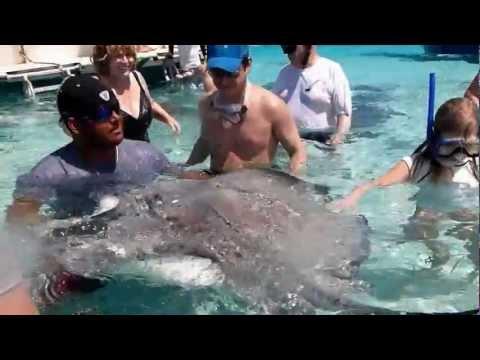 Stingray Sandbar, Cayman Islands