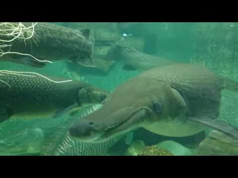 Manila Ocean Park 2016 - oceanarium fishes