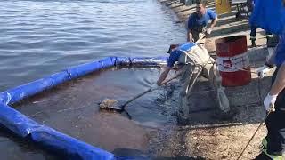 Нефтяное пятно в Волге близ Саратова