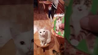 Самая умная кошка
