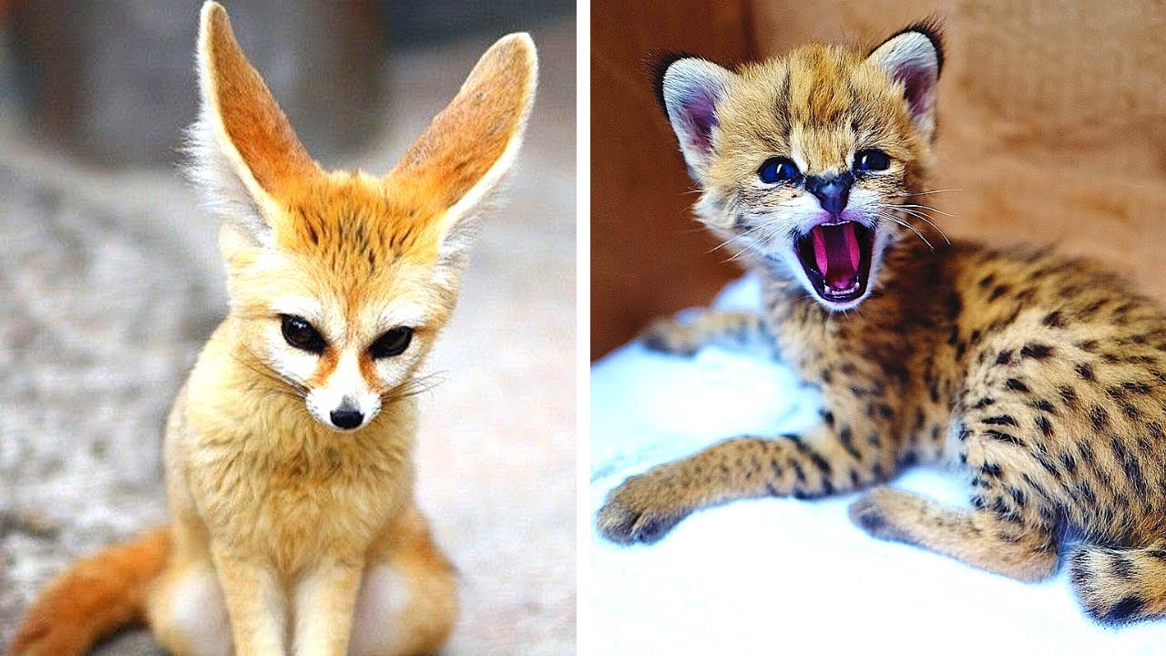 Download 10 Cutest Exotic Animals You Can Own As Pets