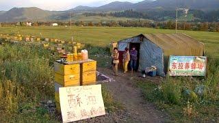 新疆那拉提草原東拉養蜂場 Bee Farm (China)