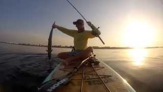 LIVE Water Sports - SUP Fishing for Destin Kings