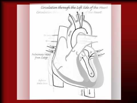 Parable of Heart, Lungs, Circulation.wmv