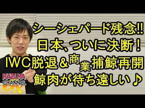 日本、ついに決断!IWC脱退&商業捕鯨再開!将来、鯨も寿司のように欧米で人気食になるやも?