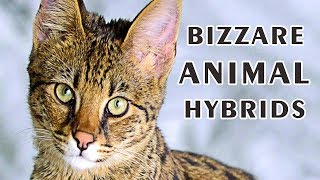 Top Five Bizzare Animal Hybrids That Actually Exist | Vlog#38 by HooplakidzLab