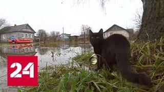 Смотреть видео В Новгородской области ждут вторую волну паводка - Россия 24 онлайн