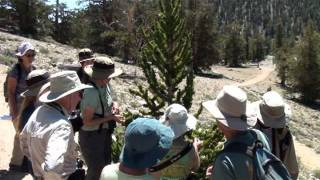 White Mountains Excursion of Eastern California (Channel Islands Restoration)