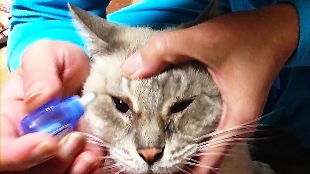 Free Treatment For Cats