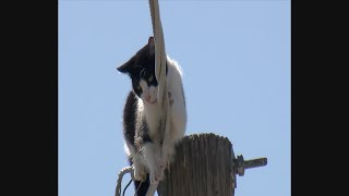 Cat Rescued After Days On Utility Pole