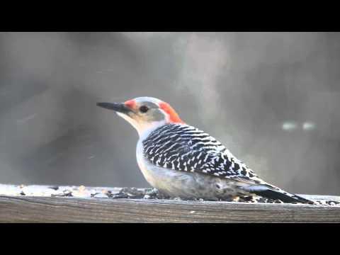 Ohio yard birds fall 2013