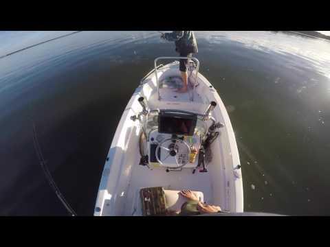Moreton Bay Morning Jewfish