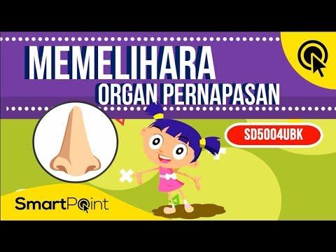 Sebutkan 3 Cara Merawat Organ Pernapasan Bisabo Channel 2019