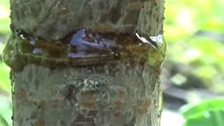 Cea mai eficienta metoda de a impiedica furnicile sa se urce in pomi