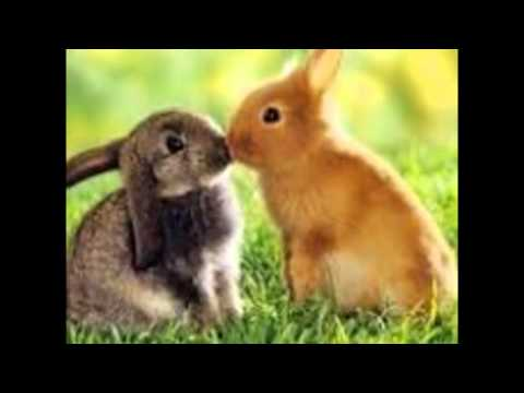 Souvent photos de lapin trop mignon - YouTube UA21