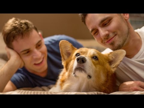 Dogs VS Couples: Who's Whose Owner?