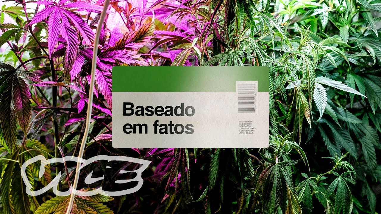 Baseado em Fatos: a legalização da Cannabis no Brasil