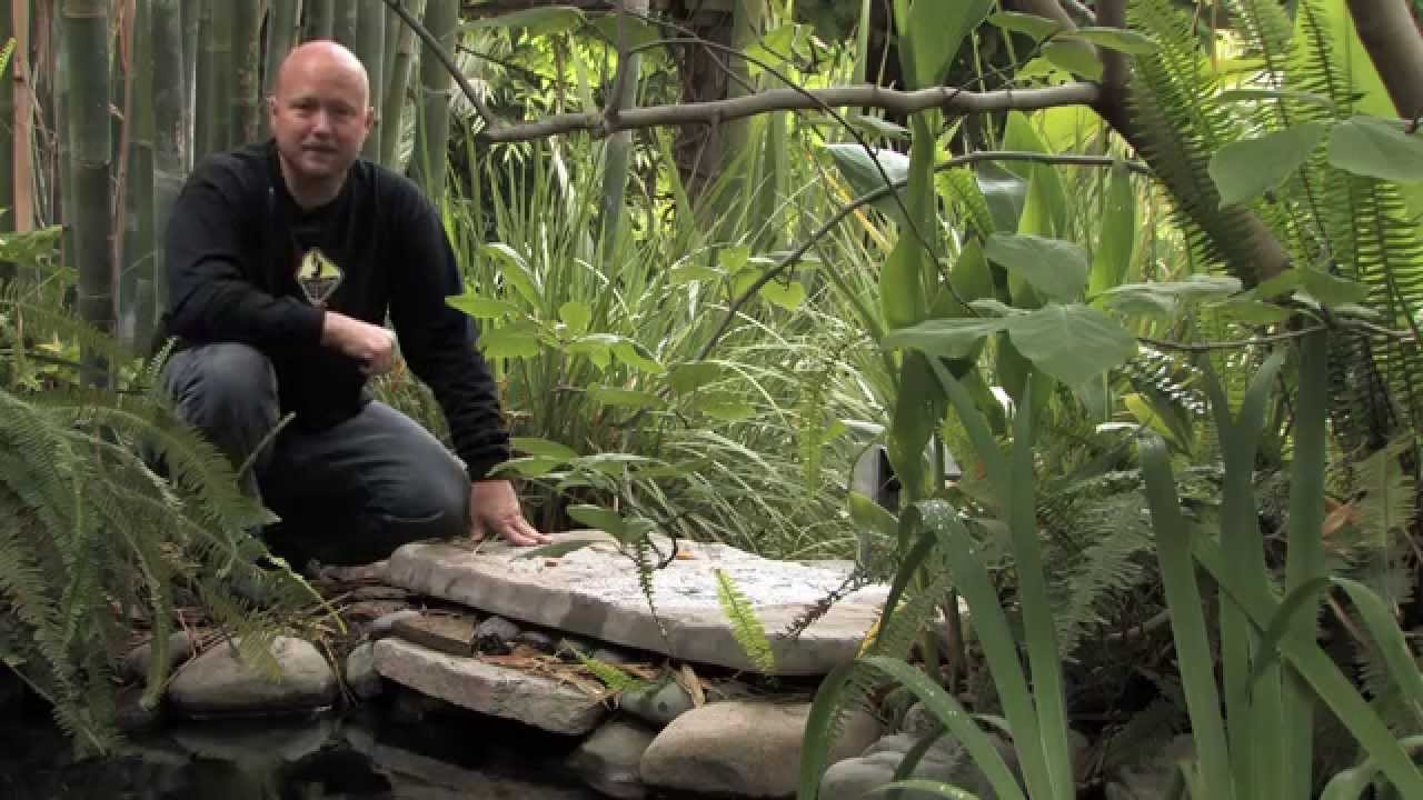 Koi Pond | Water Garden Design   YouTube