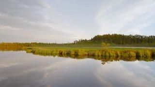 Без комментариев  Васюганские болота 4 | Живая Планета