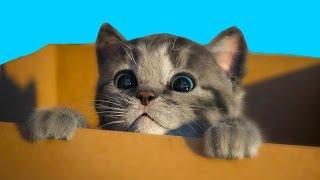 МОЙ Маленький КОТЕНОК СИМУЛЯТОР котика виртуальный питомец как мультик видео для детей  #ПУРУМЧАТА